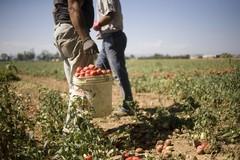 Sicurezza in agricoltura, bando per le aziende di Trinitapoli