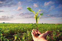 PSR, i giovani imprenditori agricoli chiedono atti concreti prima del Natale