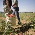 Agricoltura, stop ai pesticidi dannosi