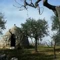 Cresce l'agriturismo in Puglia ma nella Bat le strutture sono solo 28
