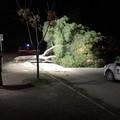 Forti raffiche di vento, abbattuto albero a Trinitapoli