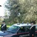 Controlli serrati tra Trinitapoli e Cerignola, cinque arresti