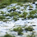 Nevicata, il sindaco chiede per Trinitapoli lo stato di calamità naturale
