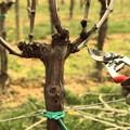 Parte oggi il corso di potatura e innesto degli alberi da frutto