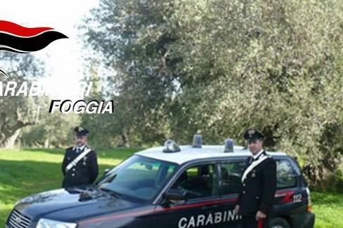 Carabinieri furto olive