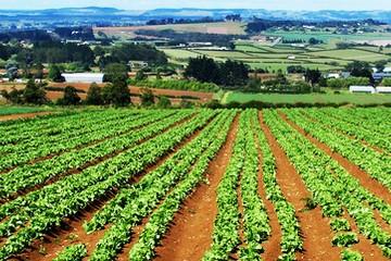 Agricoltura5
