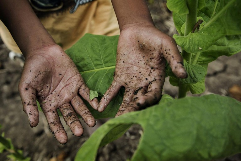 Bambini agricoltura