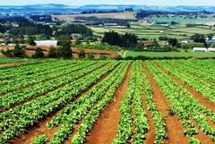 Nella provincia Bat il maggior numero di terreni in vendita da parte dell'ISMEA