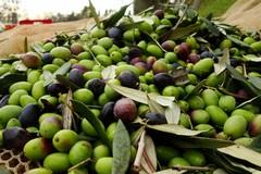 Agricoltura, firmata la declaratoria dello stato di calamità