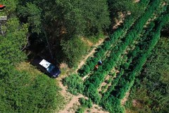 Operazione Green Power, cinque arresti a Trinitapoli