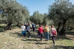 """La """"Camminata tra gli olivi"""" fa tappa a Trinitapoli"""