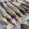 Capodanno all'insegna del pesce sulle tavole dei pugliesi