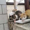 L'appello di due gattari: «Colonia felina in aumento, gatti vengono avvelenati»