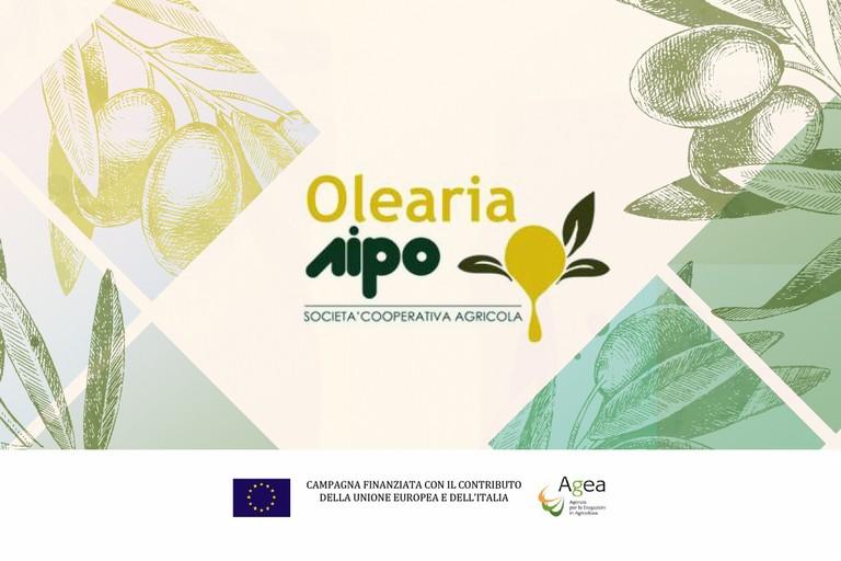 Olearia AIPO